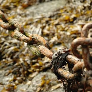 Rust & Seaweed
