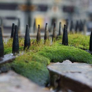 Spiky Moss