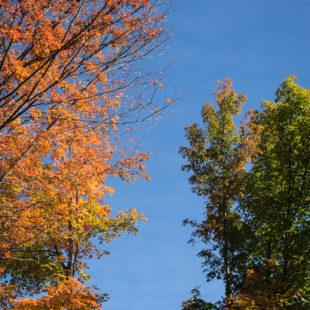 Leafy Spectrum